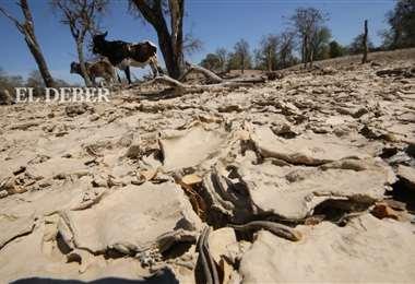 El ganado sufre por la falta de agua y de forraje /Foto: Hernán Virgo