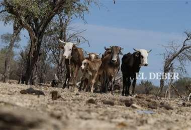Hace meses que cae una sola de gota en el Chaco/Foto: Hernan Virgo