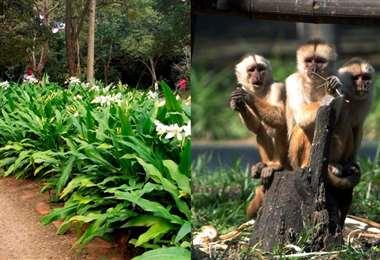 Jardín Botánico y tres ejemplares de los monos cariblanca