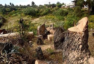 Los comunarios de Porvenir denunciaron tala ilegal