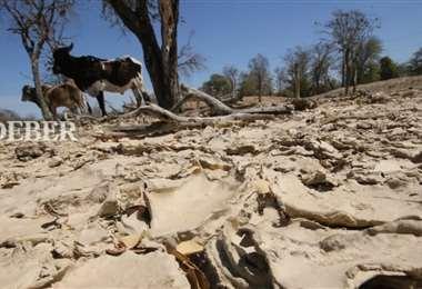 Hace 10 meses que no llueve en el Chaco tarijeño /Foto: Hernán Virgo