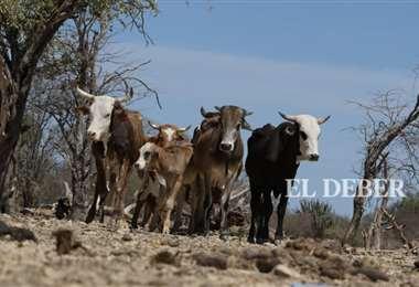 Los ganaderos dicen que no pueden acceder a créditos/Foto: Hernan Virgo