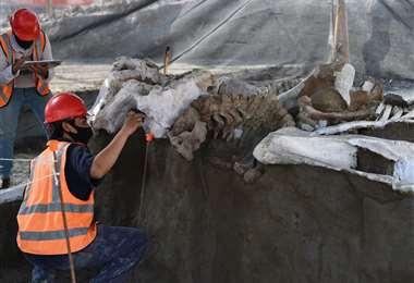 Restos encontrados en las excavaciones para el nuevo aeropuerto. Foto AFP