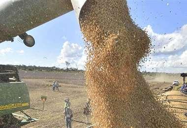 Bolivia exporta grano de soya y derivados a Perú