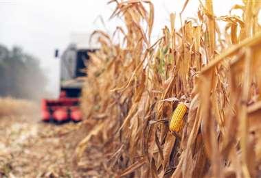 Los productores, rechazan restricciones a exportaciones