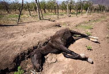 La sequía es una de las consecuencias del cambio climático