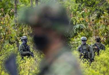 Perú, Colombia y Bolivia son los mayores productores mundiales de hoja de coca y cocaína