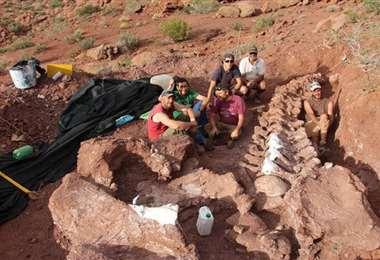 Restos de saurópodo hallados en Argentina