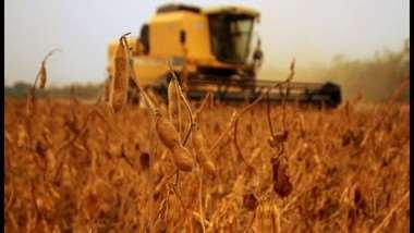 El sector soyero registró buen desempeño productivo en 2020, pese a la pandemia