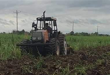 Productores del norte encaran trabajados en sus parcelas agrícolas