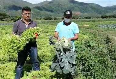 Productores de hortaliza lamentan la pérdida de producto por la cuarentena