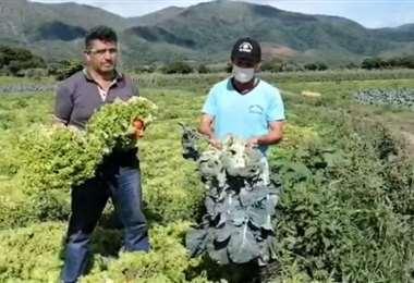 Productores de los valles muestran las hortalizas que no pudieron vender