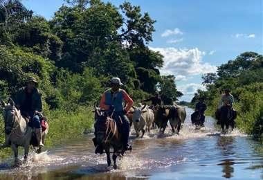 Los ganaderos movilizan sus animales a zonas altas