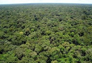 La reserva forestal pasó a ser área protegida por ley municipal
