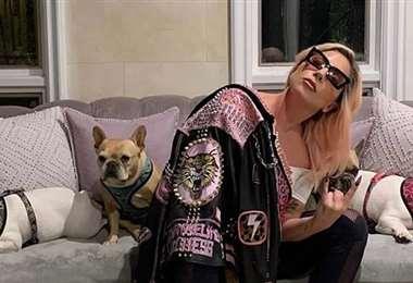 Los bulldogs franceses Koji y Gustav de la cantante regresaron sanos y salvos
