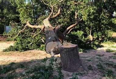 Los árboles afectados