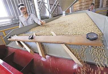 El precio de la soya sigue en alza en el mercado internacional/Foto: EL DEBER