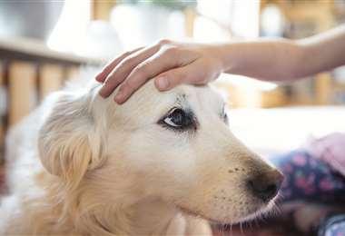 Existe preocupación por los efectos que tendría la variante británica en las mascotas