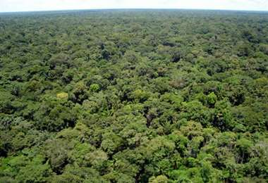 Una veintena de instituciones busca proteger los bosques