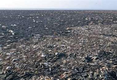 El año pasado de registró mortandad de peces en Laguna Concepción