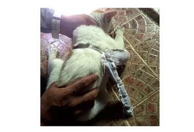 El gato transportaba, posiblemente, cocaína, crack y marihuana