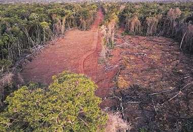 La zona más afectada por el trafico de tierra es la Chiquitania/Foto: EL DEBER