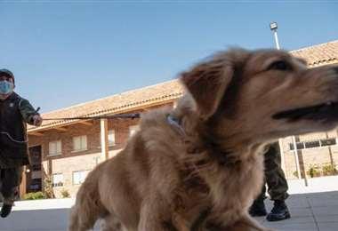Los perros que se entrenan con el método Arcón