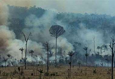 Bosques de la Amazonia brasileña emitieron más carbono