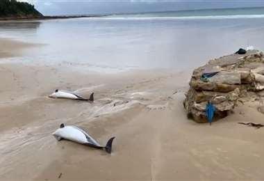 Unos 60 delfines muertos encallados en las playas de Ghana