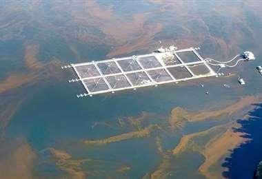 Mortalidad por floración de algas