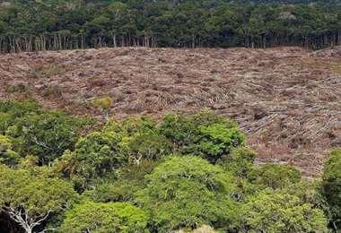 La deforestación no se detiene en tierra brasileña