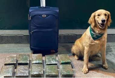 Frodo dio la alerta al guía de las mochilas donde se transportaba la droga