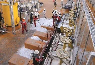 Proyecta alcanzar una producción de 15.000 toneladas por año