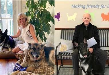 Joe y Jill Biden se mudaron con sus perros Major y Champ, dos pastores alemanes