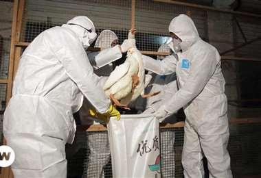 China confirma primer contagio humano de gripe aviar. Foto: DW H10N3