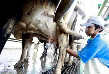 Día internacional de la leche