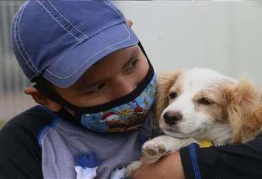 La adopción de animales en el albergue municipal es una alternativa viable. Foto: J.Ibáñez