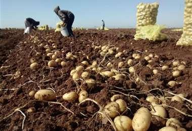 Los productores aseguran no poder cubrir sus costos de producción con los precios actuales
