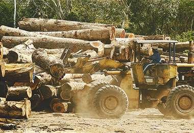 En el país operan más 15.000 empresas forestales/Foto: EL DEBER