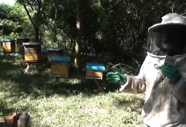 Los panales lucen vacíos tras registrarse la mortandad de abejas en Río Grande