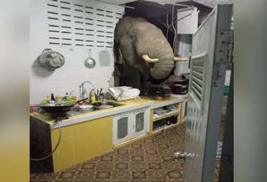 Un elefante visita a una familia en Tailandia