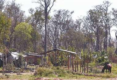 Los invasores ocupan tierras de vocación forestal