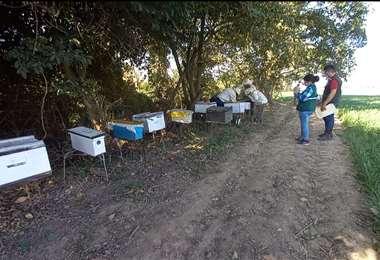 Técnicos del Senasag toman muestras en las colmenas dañadas