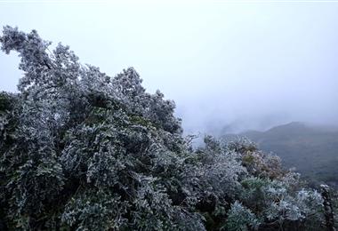 La nevada comienza a cubrir los árboles en Pucará. Foto. Juan Carlos Aguilar