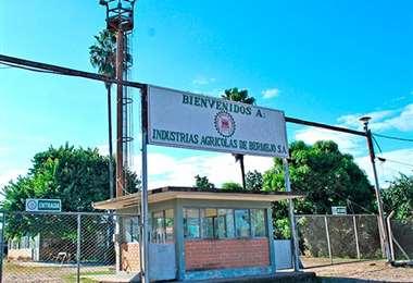 El ingenio de Bermejo producirá 700.000 quintales de azúcar