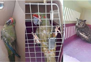 Los animalitos están en custodia de la Alcaldía y Gobernación cochabambina