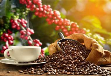 El cultivo y producción de café es considerado todo un arte
