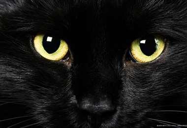 """""""El gato Negro"""" se presenta este jueves"""
