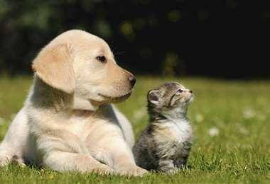 Se puede adoptar animales y llevarlos a su casa