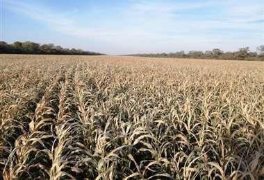 Anapo prevé una dura temporada seca hasta octubre